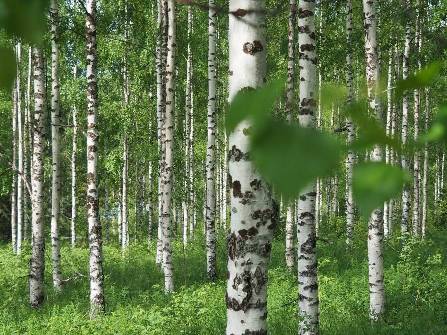 Metsämieliretki