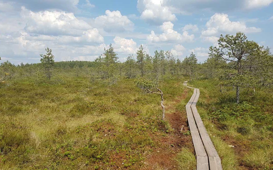 Pitkin poikin pitkospuilla – puolipäiväretki Kurjenrahkan kansallispuistoon